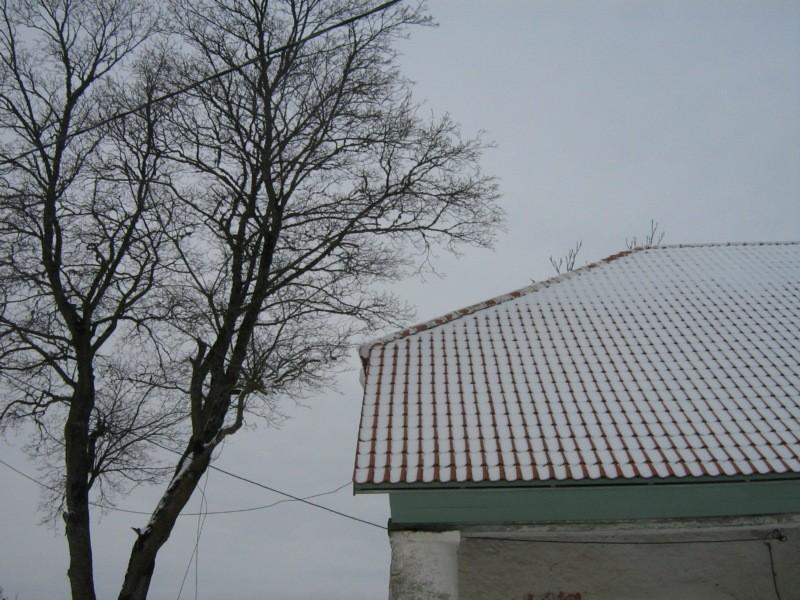 Lihula aida nurk ja mahasaagimisele minev puu, Kalli Pets, 17.01.2011 004