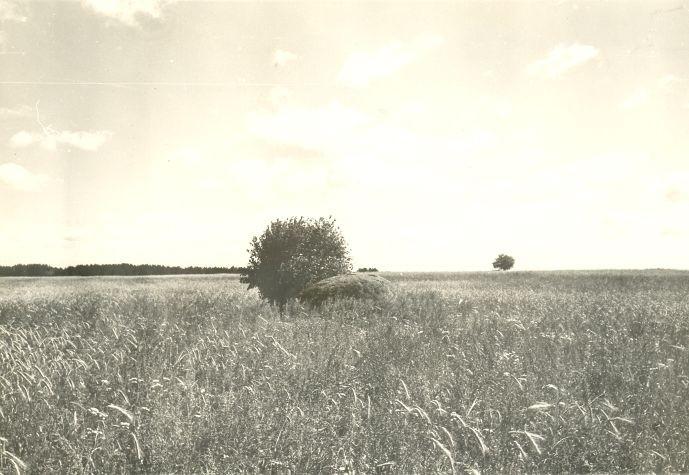 Kultusekivi - läänest. Foto: H. Joonuks, 1979.