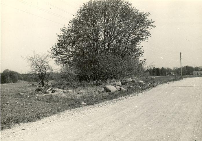 Kivikalme - läänest. Foto: H. Joonuks, 1980.
