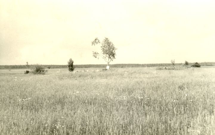Neli kivikalmet 10663-10666 (1454-1457) Kannastiku külas. Foto: H. Joonuks, 1971.