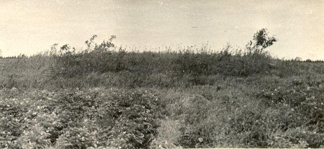 Kivikalme reg nr 10786. Foto saadud Rakvere rajoonidevaheliselt Koduloomuuseumilt 1967. a.
