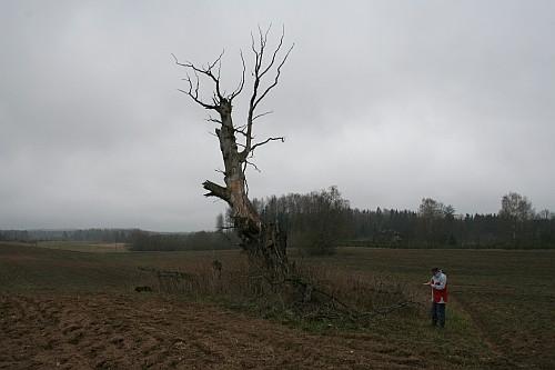 Vaade hukkunud Hiietammele. Foto: K. Lange, 24.04.2007.