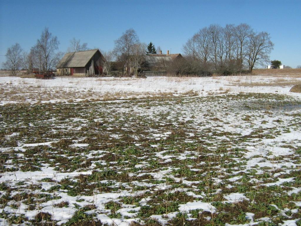 Koht, kus peaks asuma lohukivi 10885. Foto: Ingmar Noorlaid, 26.03.2012.