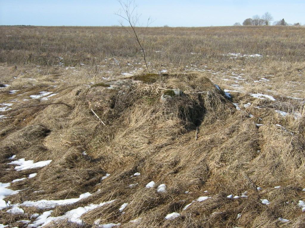 Lohukivi, reg nr 10882. Foto: Ingmar Noorlaid, 26.03.2012.