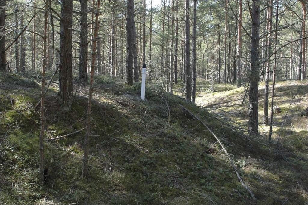 Auk  Autor M. Mõniste  Kuupäev  05.05.2007