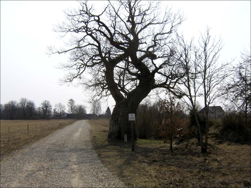 Tärkma tamm  Autor D. Lukas  Kuupäev  29.04.2006