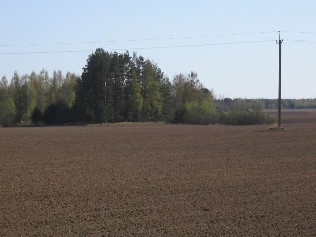 Kalmistu asub põllu servas puudega kaetud alal.