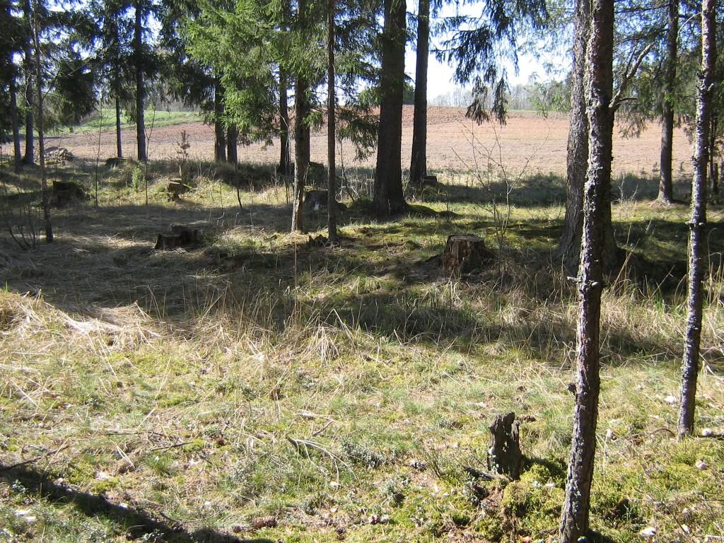 Vaade metsa servas asuvale väiksemale kääpale. 04.05.2012 Viktor Lõhmus
