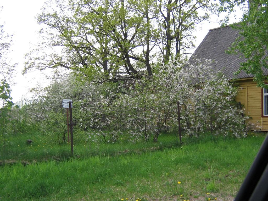 Mikitamäe küla kalmistu paikneb hoonete ja tee all. Foto: Viktor Lõhmus, 16.05.2012.