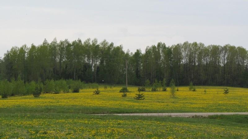 """Vaade kalmistule """"Jüri kiriku surnuaed"""" idast kivikalmelt reg nr 13150. Foto: Karin Vimberg, 17.05.2012."""