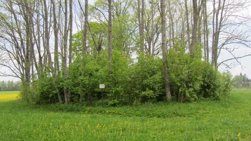 """Vaade """"Vahrete"""" kivikalmele kagust Taagepera-Äriküla teelt. Foto: Karin Vimberg, 21.05.2012."""