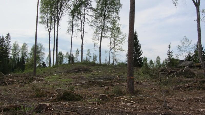 Vaade mälestisele ja selle kaitsevööndile kirdest. Foto: Karin Vimberg, 21.05.2012.