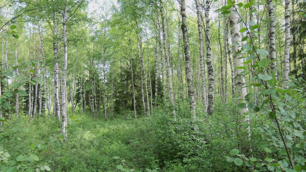 Vaade lõunast. Foto: Silja Konsa, 01.06.2012.