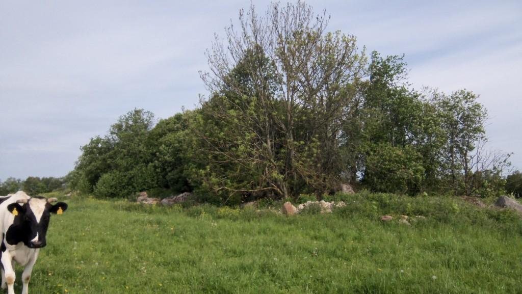 Vaade idast. Foto Silja Konsa 01.06.2012.