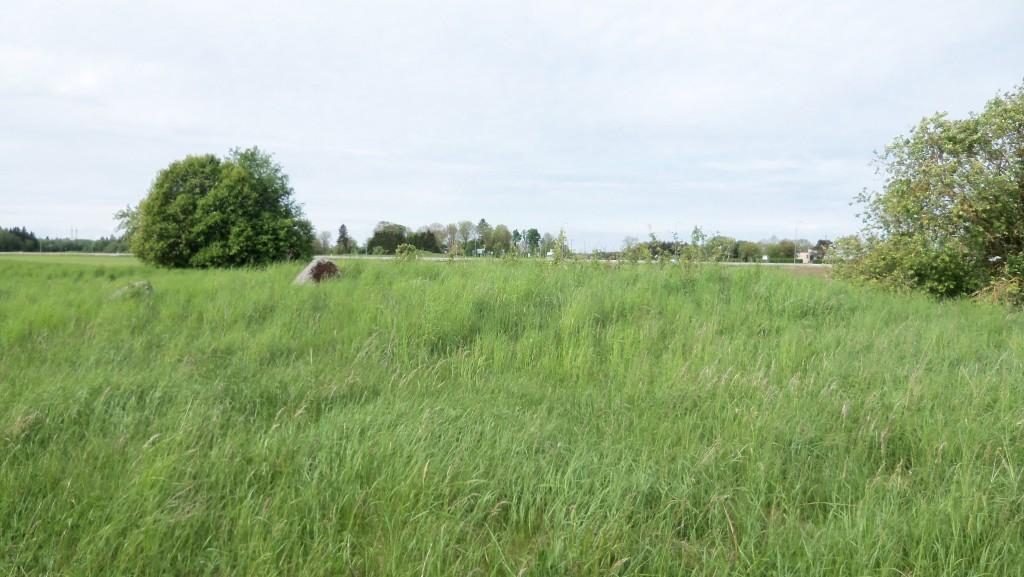 Vaade kalmele ja selle ümbrusele idast. Foto Silja Konsa 01.06.2012.