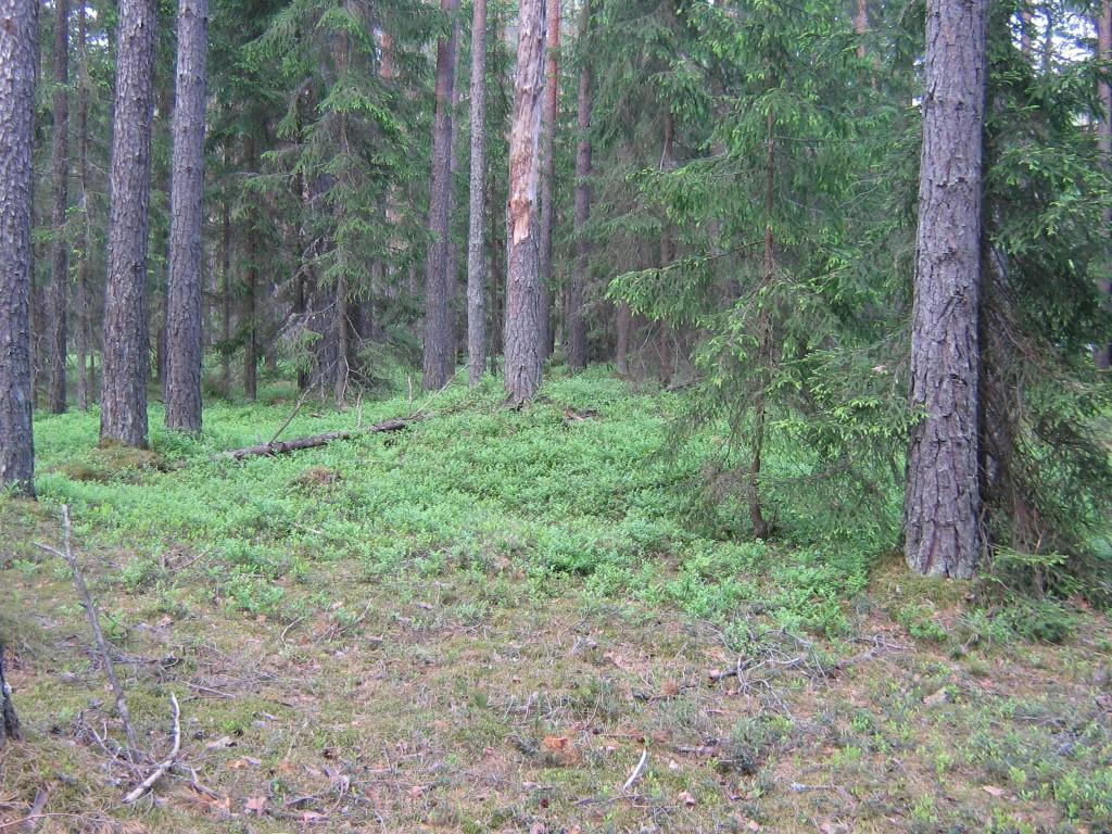 Vaade laugete nõlvadega kääpale. Foto: Viktor Lõhmus, 06.06.2012.