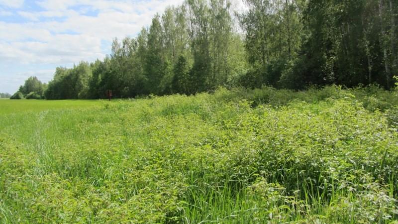 Vaade kivikalmele reg nr 12945 põhjast. Foto: Karin Vimberg, 05.06.2012.