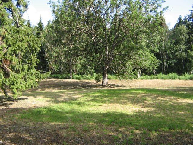 Kihlevere mõisa park : 15665 PÕHJAPOOLNE OSA  Autor ANNE KALDAM  Kuupäev  18.07.2007