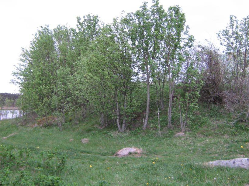 Foto: Ulla Kadakas, 25.05.2007.