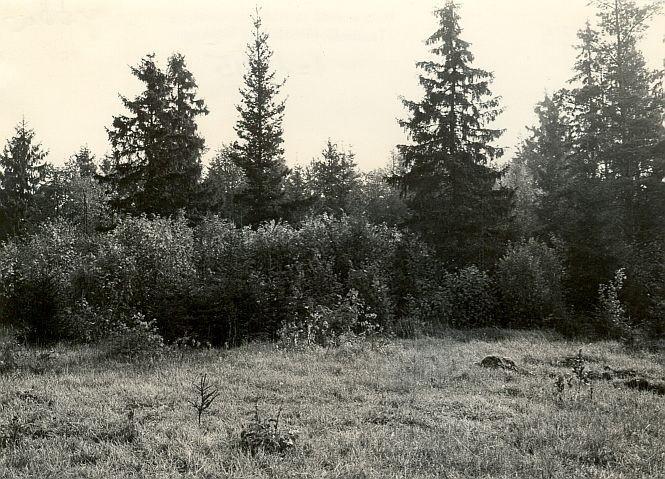 Kivikalme - läänest. Foto: E. Väljal, 03.10.1985.