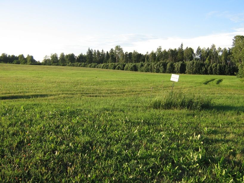 Autor Ulla Kadakas  Kuupäev  14.07.2007