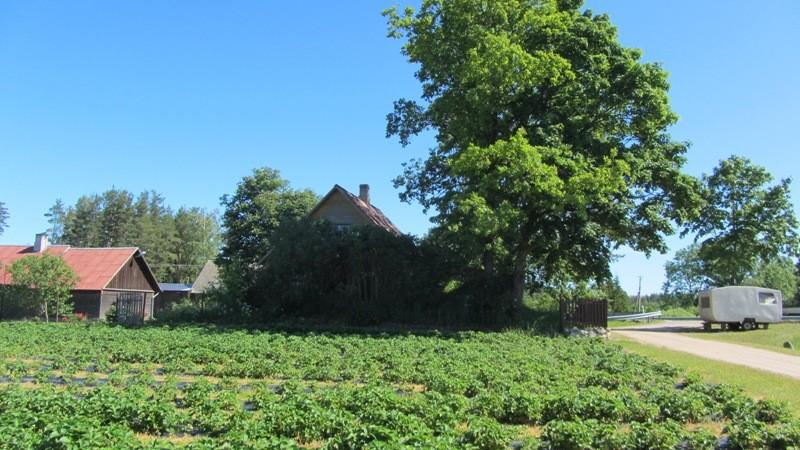 Vaade talule, mille hoovis kalmistu asub. Foto: Karin Vimberg, 21.06.2012.