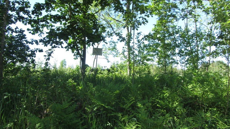 Vaade Vastsemõisa-Truuta teelt mälestisele reg nr 13162 ning sellel paiknevale tähisele. Foto: Karin Vimberg, 21.06.2012.