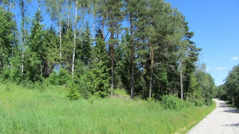 Vaade mälestisele reg nr 13176 edelast. Foto: Karin Vimberg, 21.06.2012.