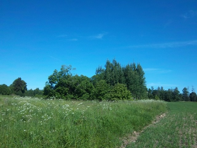 Kalmistu reg nr 12053, vaade kagust. Foto: K. Klandorf, 22.06.2012.
