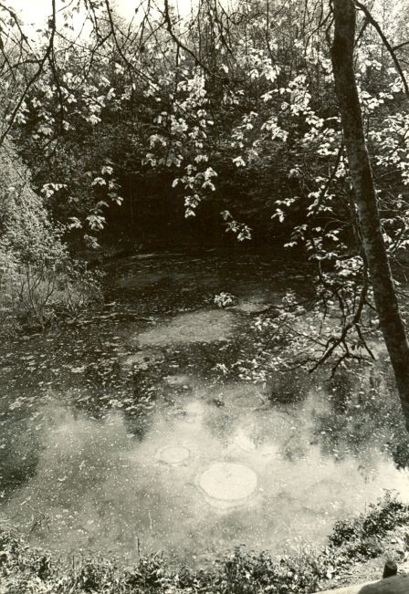 Ohvriallikas. Foto: E. Väljal, mai 1980.
