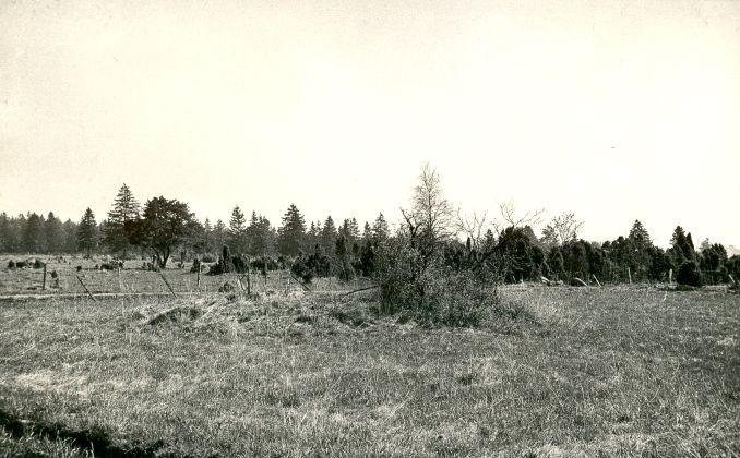 Kivikalme - edelast, A. Lavi, 1979 kevad