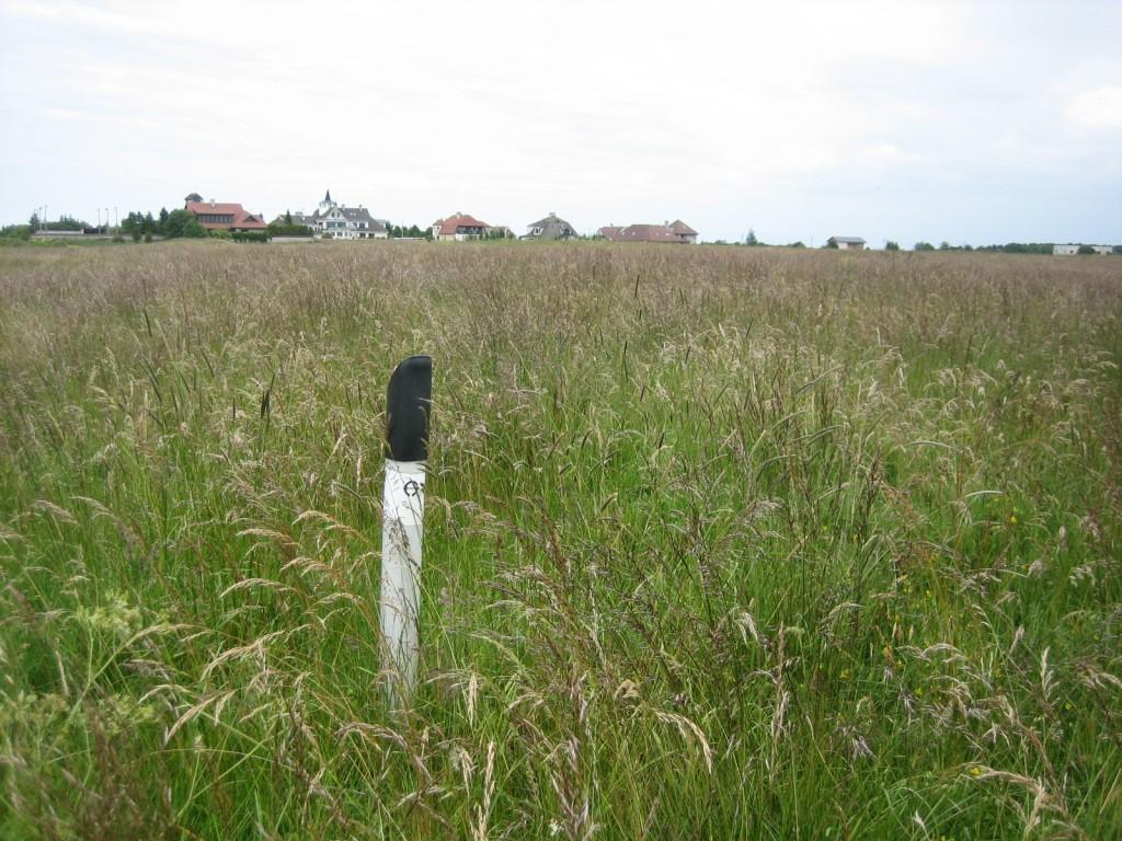 Vaade mälestise keskosast ida suunas. Foto: Silja Konsa, 05.07.2012.
