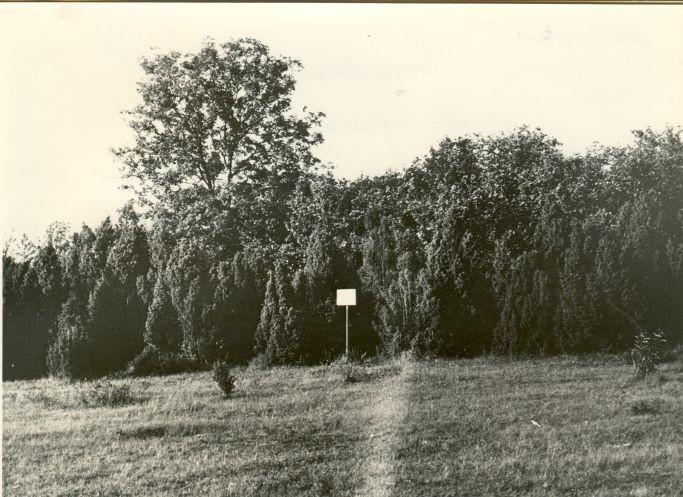 Kivikalmed 18357-18361, H. Joonuks, 1976
