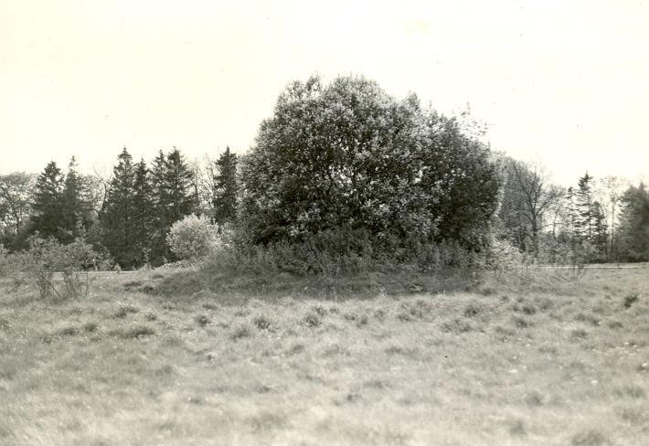 Kivikalme - kirdest, R. Kärner, 8.mai 1990