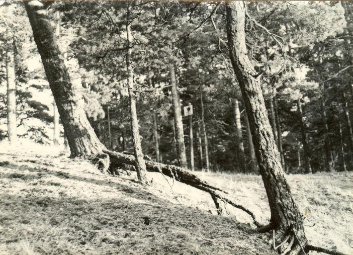 Maa-alune kalmistu. Foto: H. Kõlar, 16.08.1976.