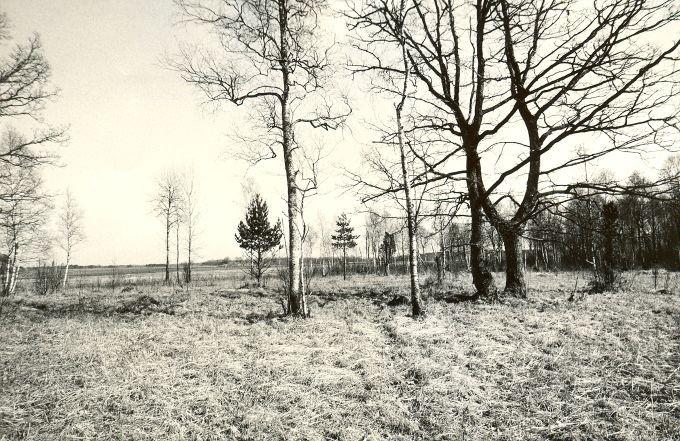 Maa-alune kalmistu - läänest. Foto: M. Pakler, 06.05.1987.