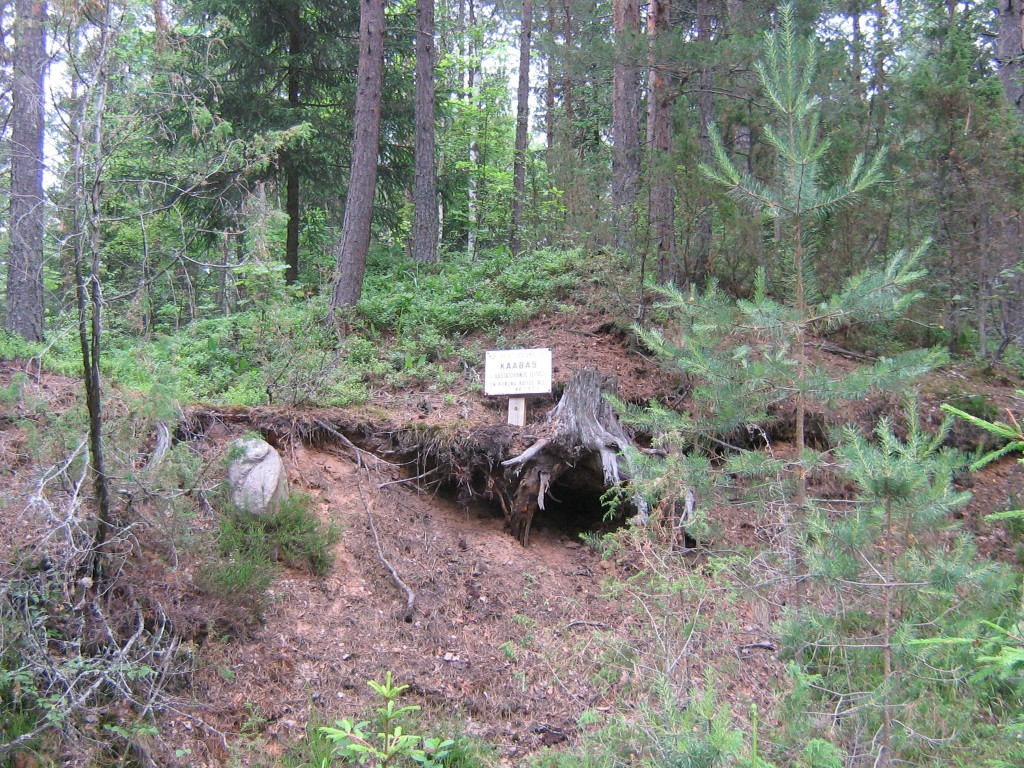 Kääbas on jäänud järsaku servale. Foto: Viktor Lõhmus, 03.07.2012.