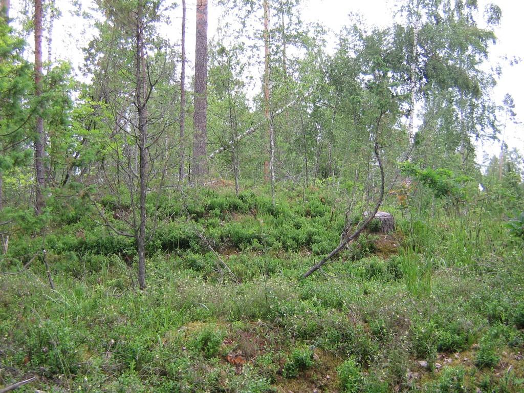 Vaade kääpale Vanaküla-Kauksi tee ääres. Foto: Viktor Lõhmus, 03.07.2012.