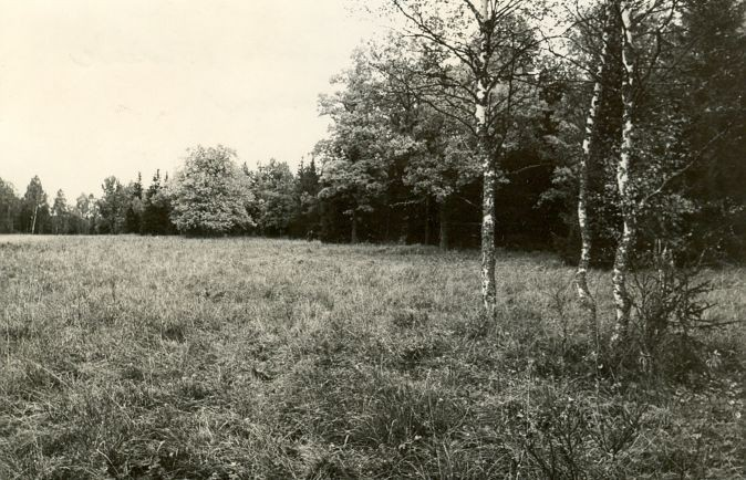 Muistsete põldude jäänused. Foto: E. Väljal, 17.09.1984.