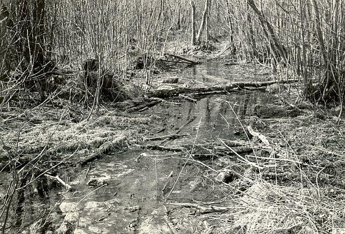Ohvriallikas - lähivaade kirdest. Foto: E. Väljal, 1980ndad aastad.