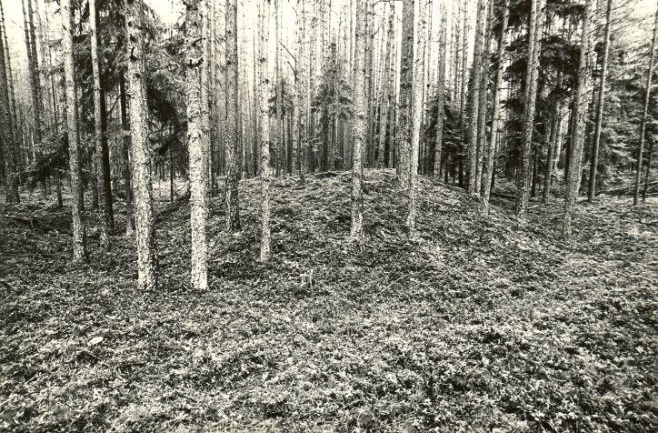 Kääpad reg nr 13453-13484. Foto: M. Pakler, september 1979.