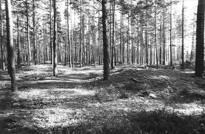 Kääpad reg nr 13541-13571. Foto: M. Pakler, 11.11.1979.