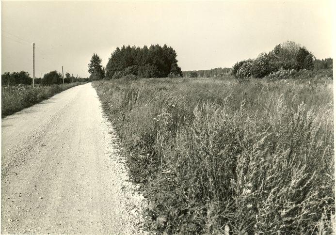 Kivikalme. Foto: A. Sillasoo, 23.08.1976.