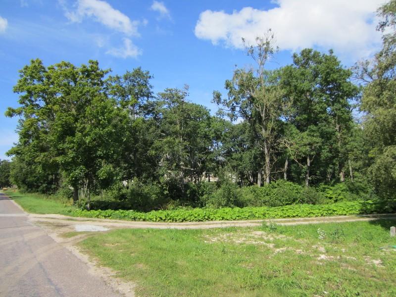 15660 Hulja mõisa park, vaade lõunast sissesõidu teelt ,pargi idapoolsele osale 08.2012 Anne Kaldam