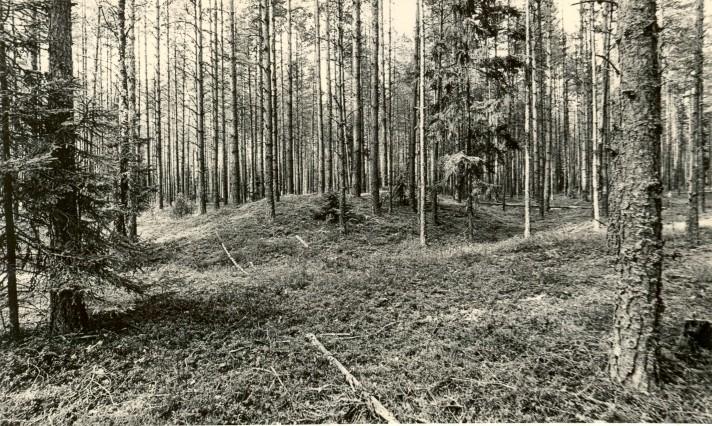 Kääbaskalmistu reg nr 11170-11175. Foto: M. Pakler, september 1975.