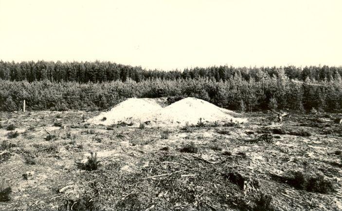 Kääbaskalmistu reg nr 11184-11202. Foto: M. Pakler, september 1975.