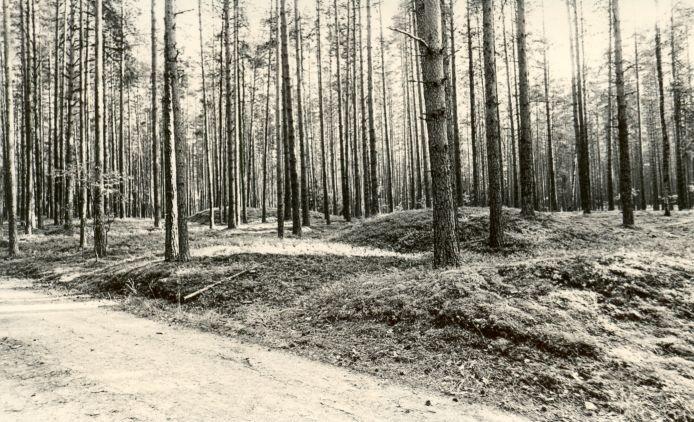 Kääpad reg nr 11203-11213. Foto: 1975.