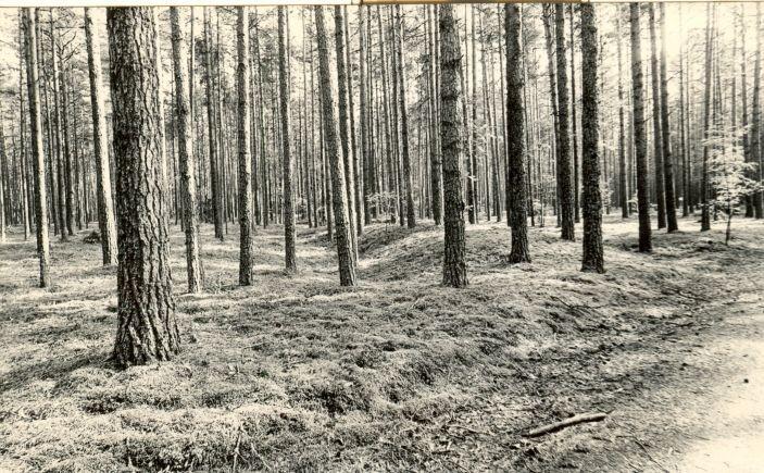 Kääpad reg nr 11203-1121. Foto: 1975.