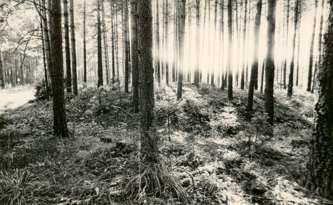 Kääpad reg nr 11353-11365. Foto: M. Pakler, september 1975.