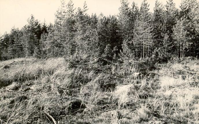Kääpad reg nr 11366-11376. Foto: M. Pakler, 09.09.1975.